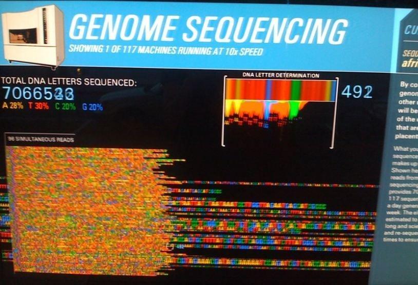 геном чая.jpg